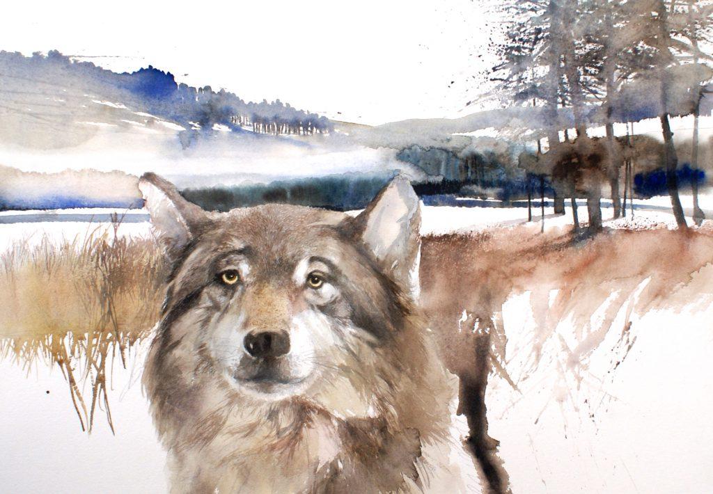 Loup des neiges. Cardboard 1200g  -Ft. 76x56cm